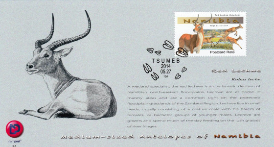 Medium Antelopes