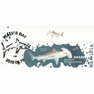 Sharks of Namibia Single Set