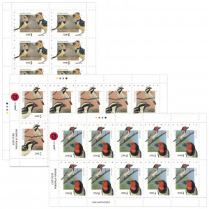 Barbets of Namibia Full Sheet