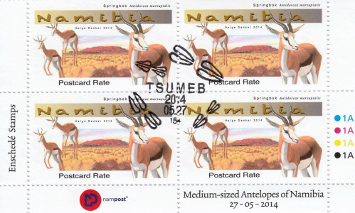 Medium Antelopes